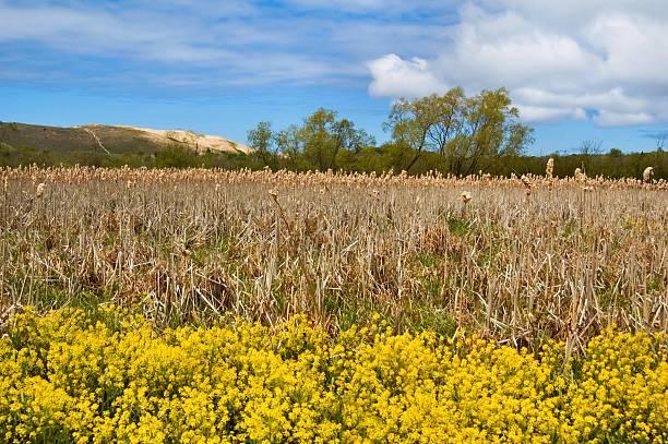 Marsh and Dune stock photo