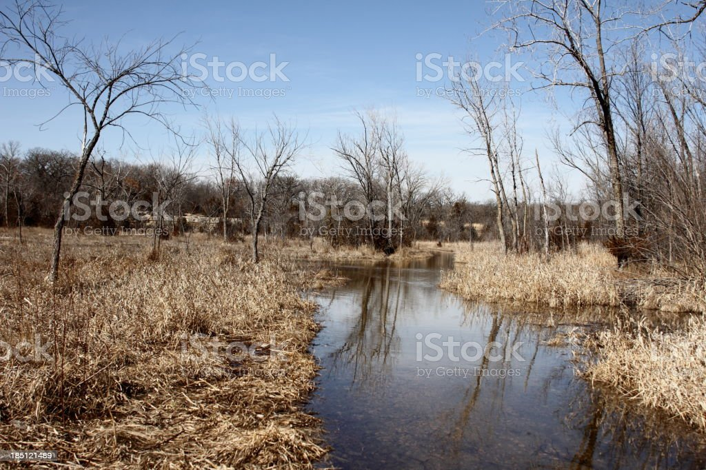 Marsh and forest royalty-free stock photo