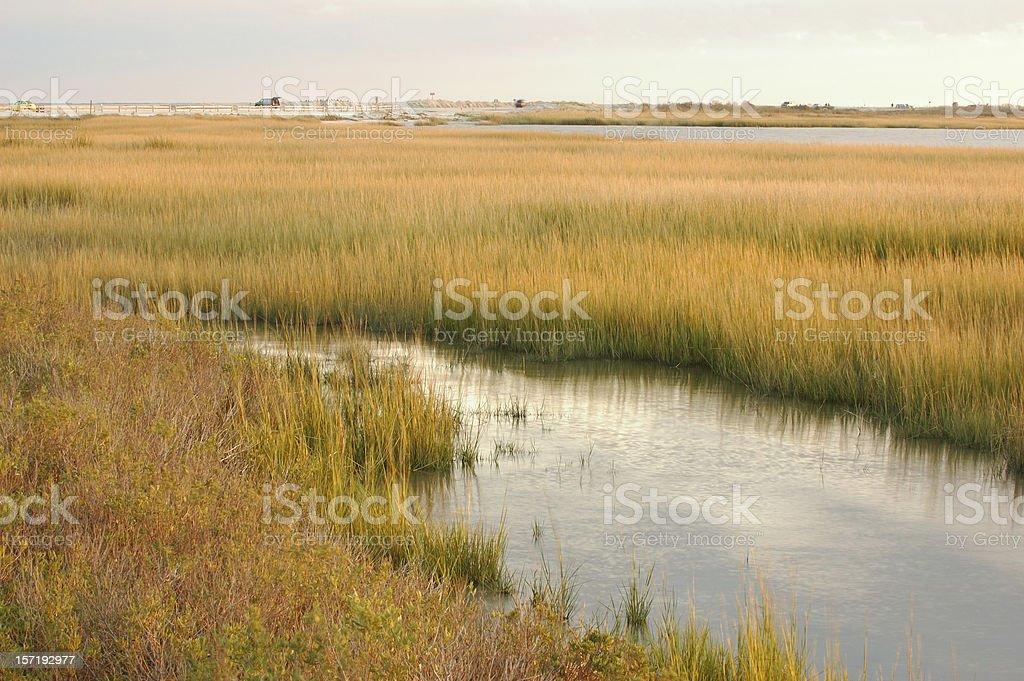 Marsh at Chincoteague Island stock photo