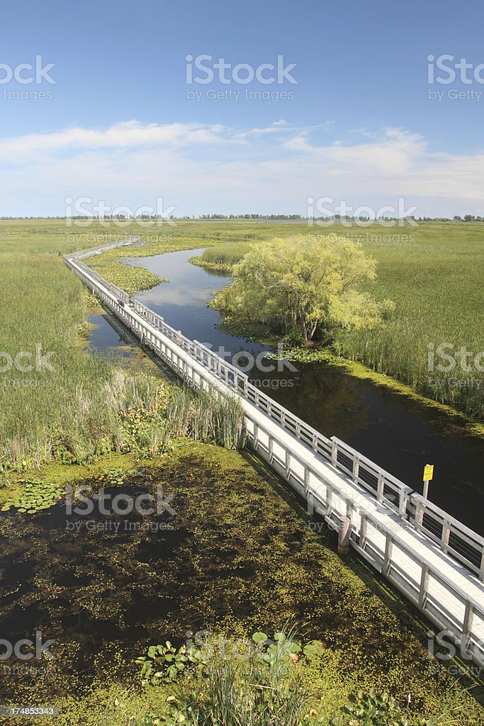 Marsh Boardwalk in Point Pelee National Park royalty-free stock photo