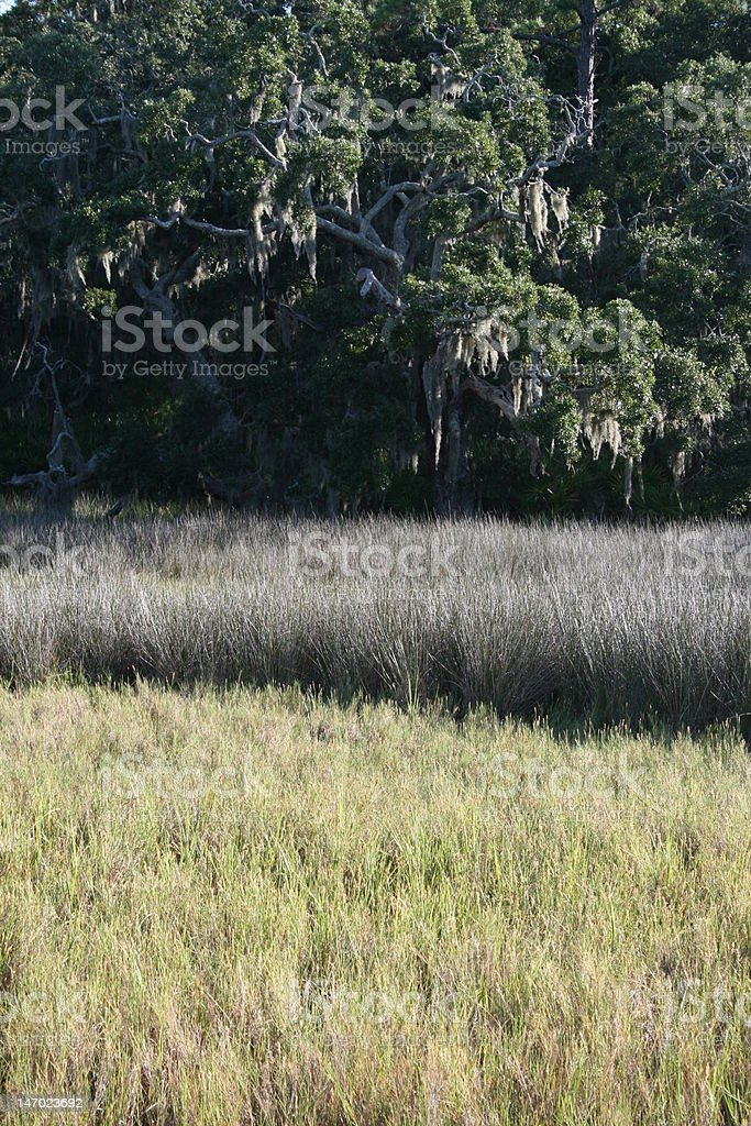 Marsh Colors royalty-free stock photo