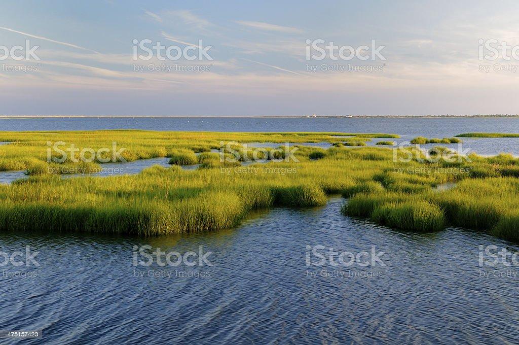 Marsh Grass Glowing in Evening Sun stock photo