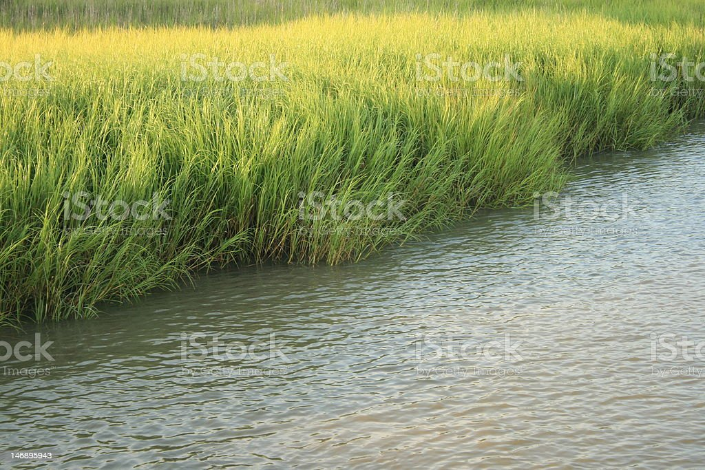 Marsh Grass royalty-free stock photo