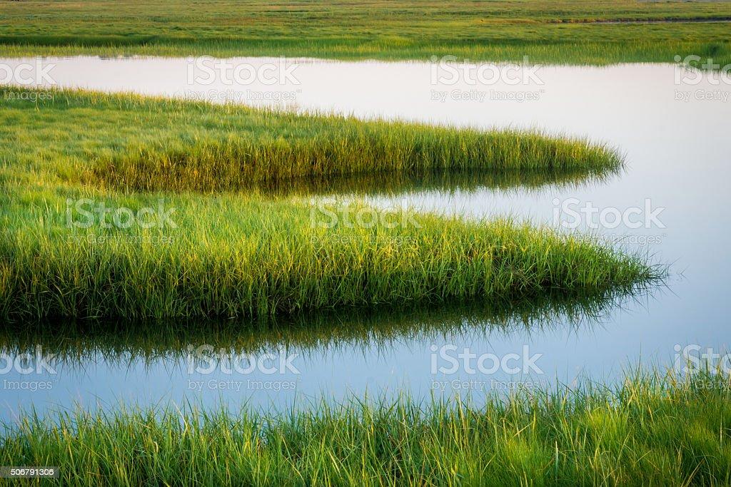 Marsh Grass stock photo