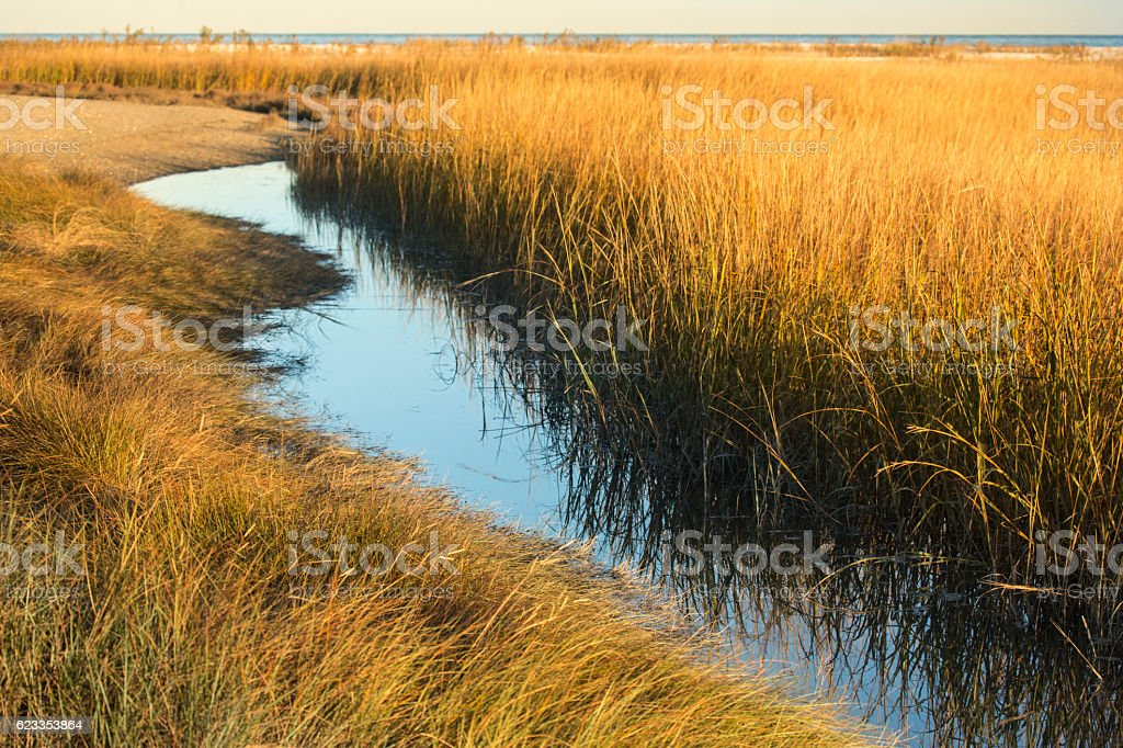 Marsh grasses at sunset in fall at Milford Point, Connecticut. stock photo