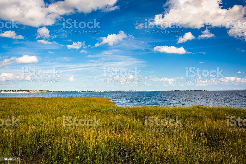 Marsh grasses at the Waterfront Park, in Charleston, South Carol stock photo