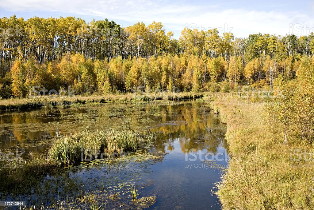 Marsh in Northern Forest royalty-free stock photo