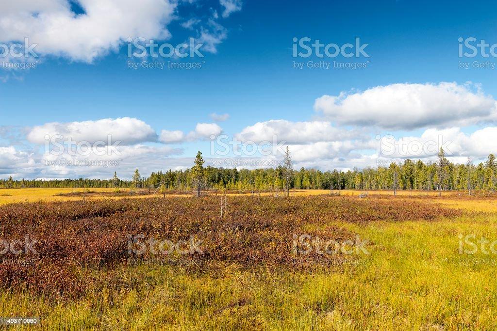marsh landscape on the Yamal Peninsula in Siberia stock photo