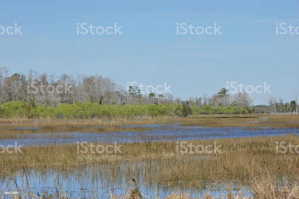 marsh landscape royalty-free stock photo