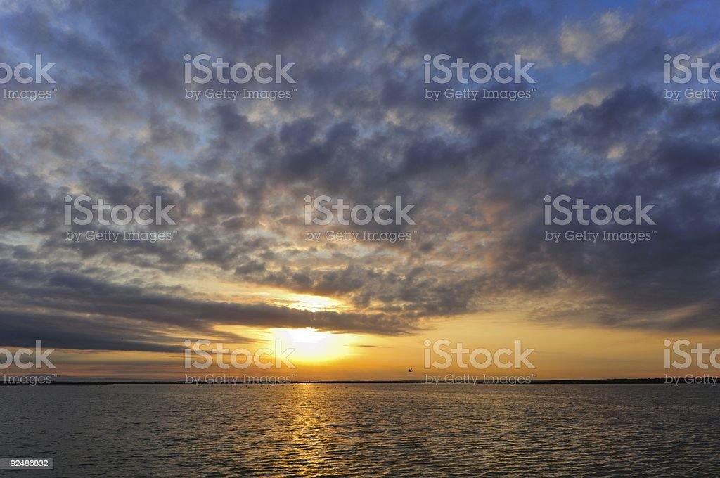 marsh landscape with greater flamingoes under a cloudy dawn royalty-free stock photo