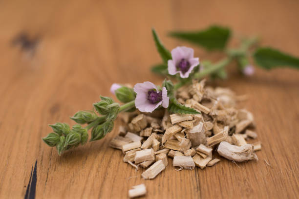 Marsh mallow (Althaea officinalis) dried roots stock photo