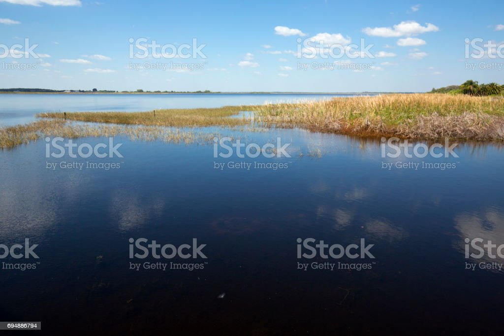 Marsh on shore of Lake Tohopekaliga on a spring day. stock photo