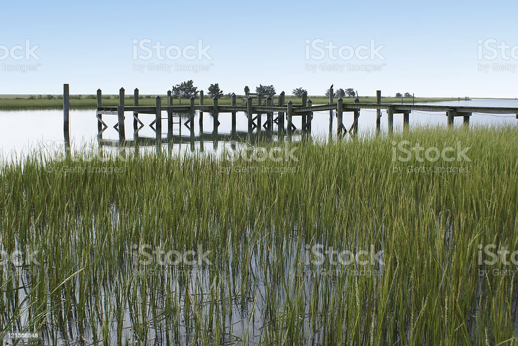 Marsh stock photo