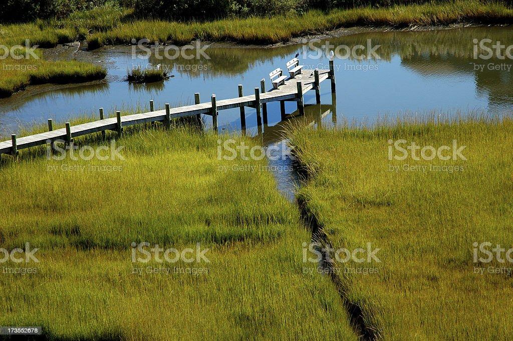 Marsh royalty-free stock photo