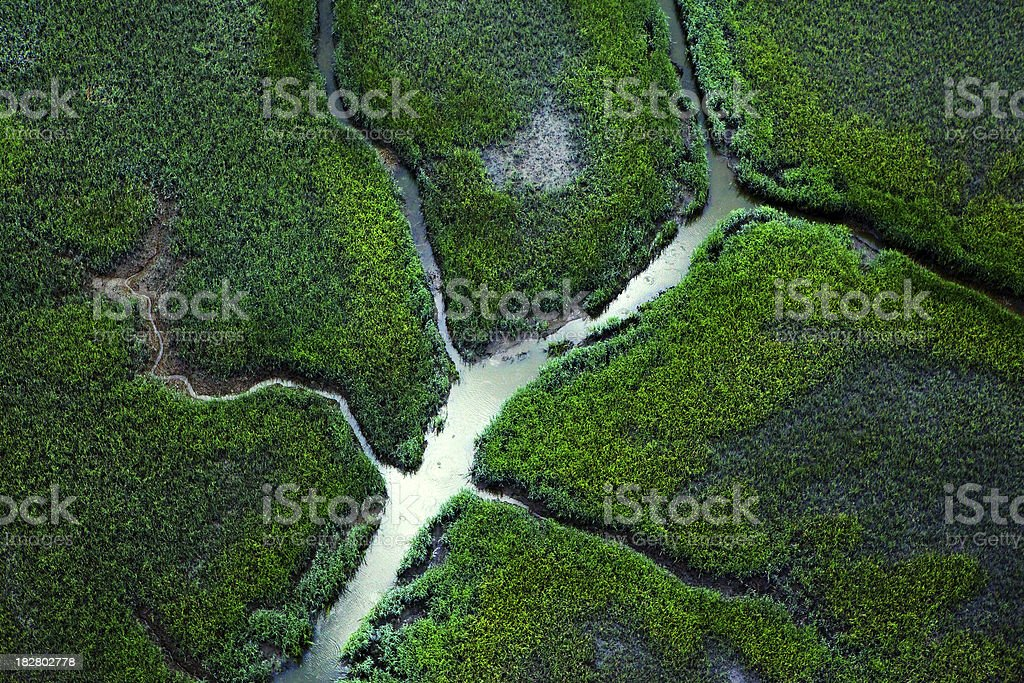 Marsh stock photo