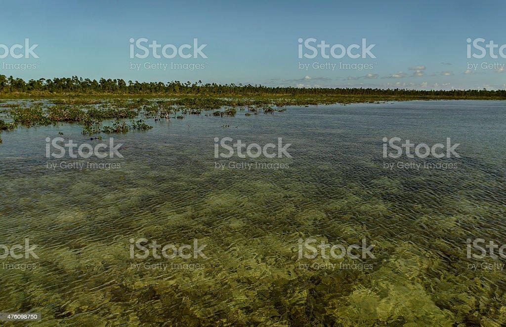 Marsh . stock photo