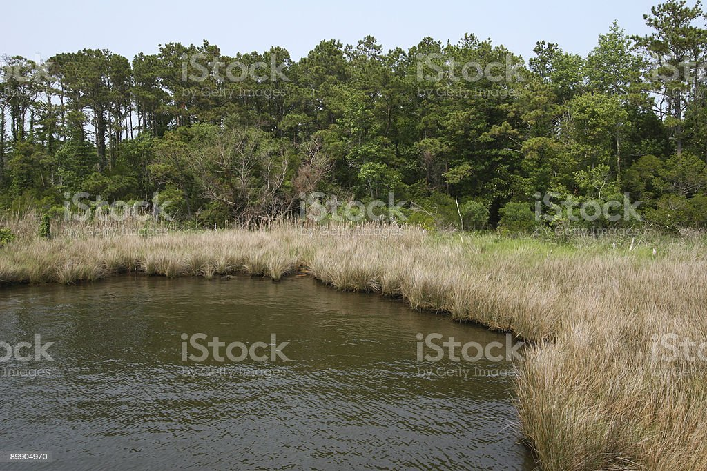 Marsh royalty-free stock photo