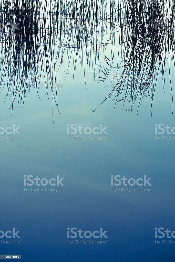 Marsh water royalty-free stock photo