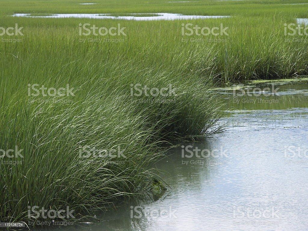 marsh2 royalty-free stock photo