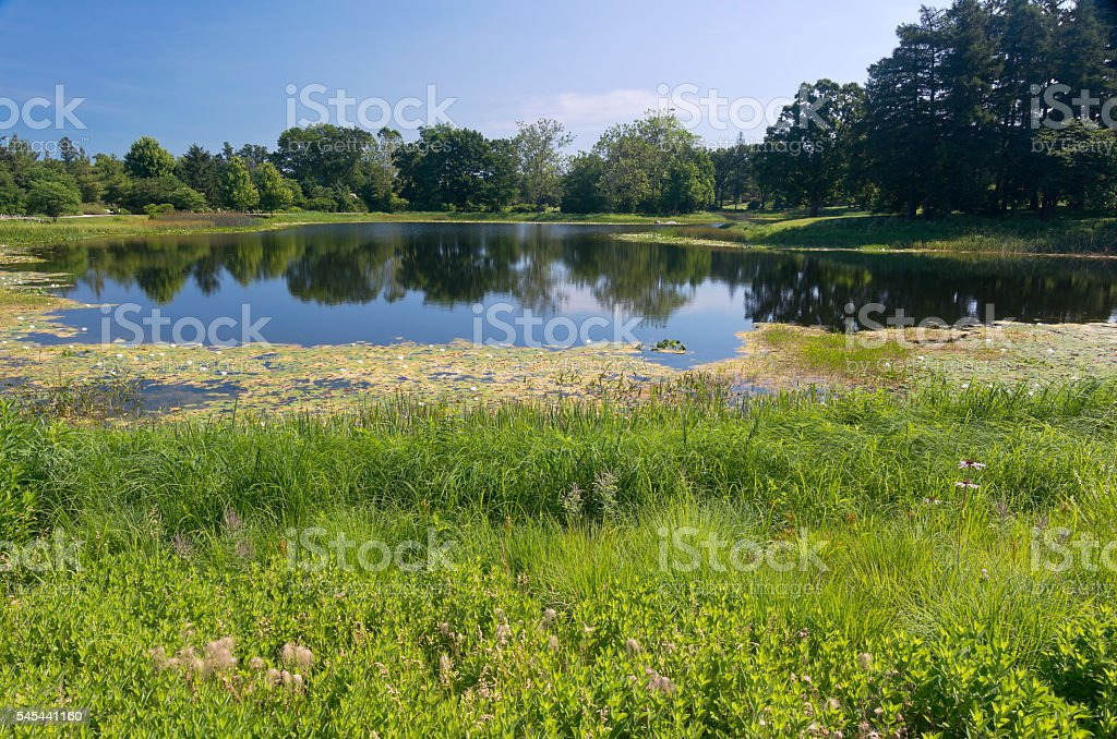 Marshes and Lake at Arboretum stock photo