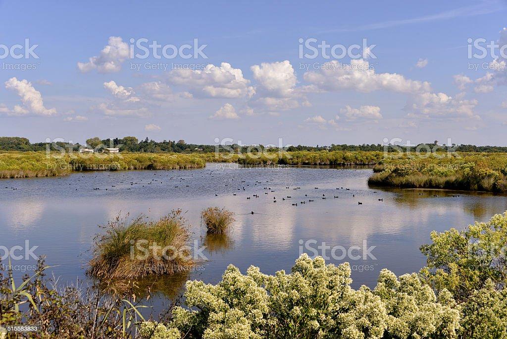 Marais salants de la baie de Arcachon - Photo