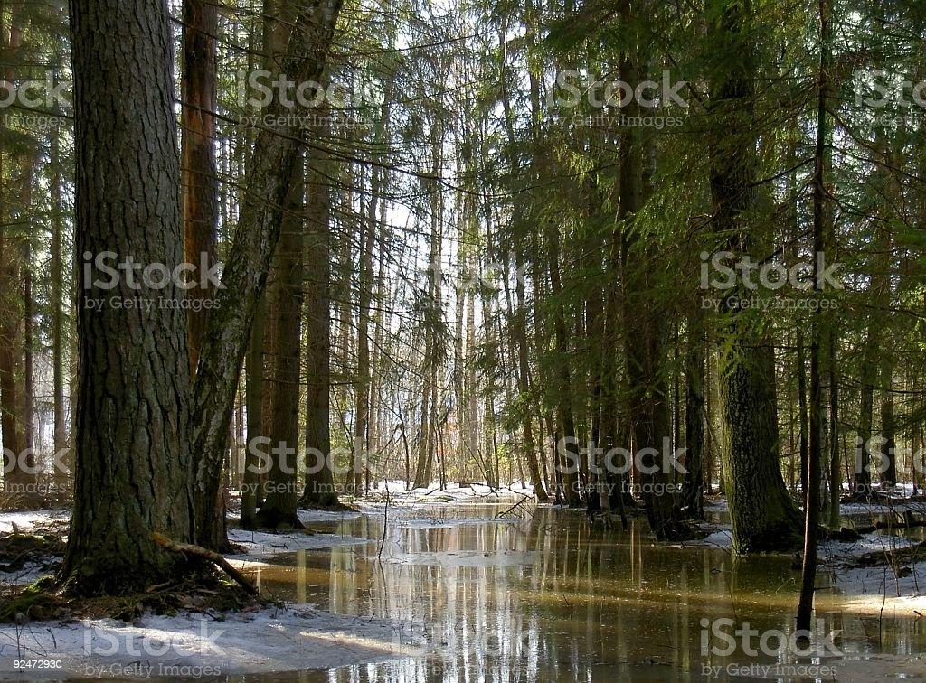 marshland forest royalty-free stock photo