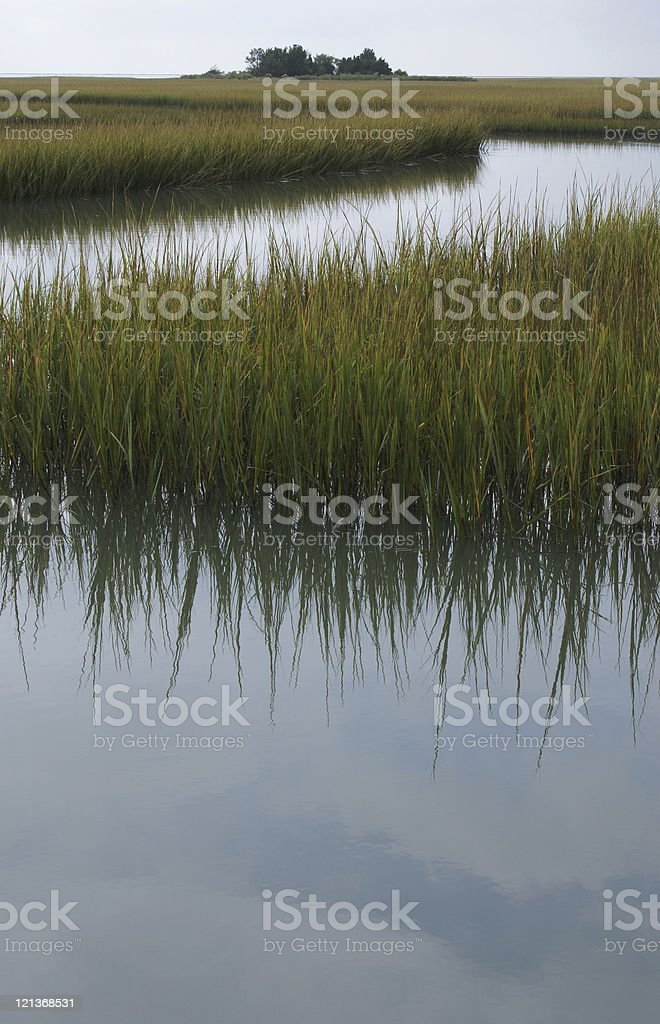 Marshland royalty-free stock photo