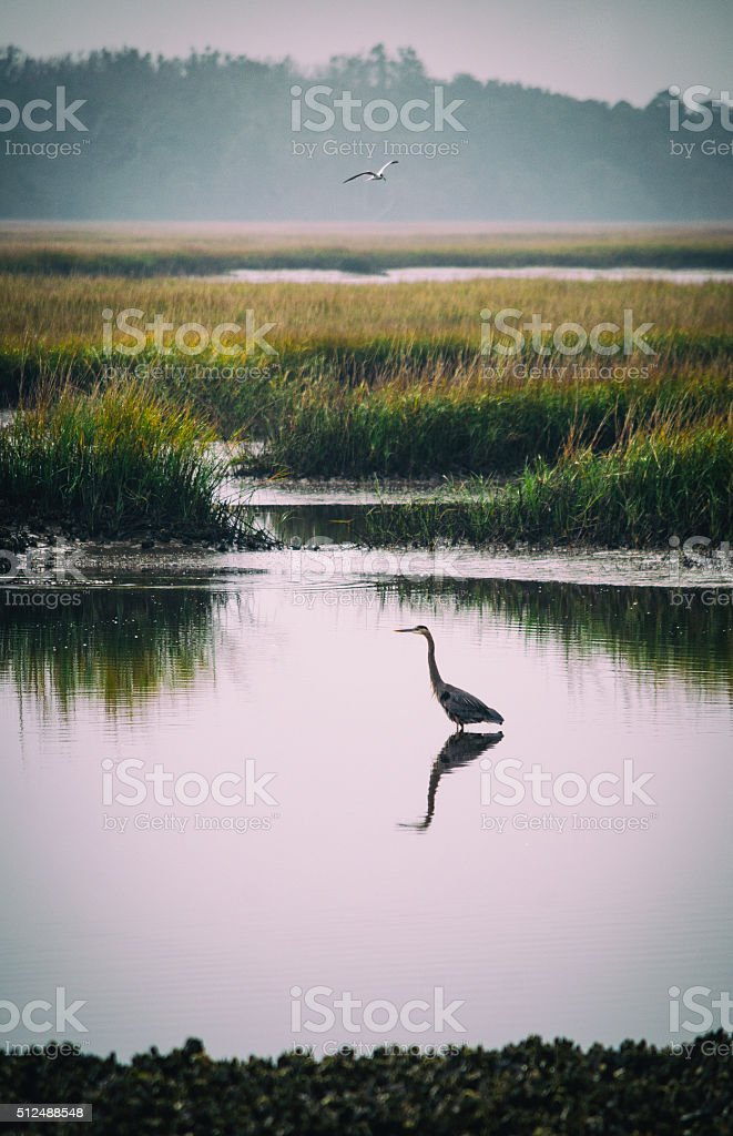 Marshlands stock photo