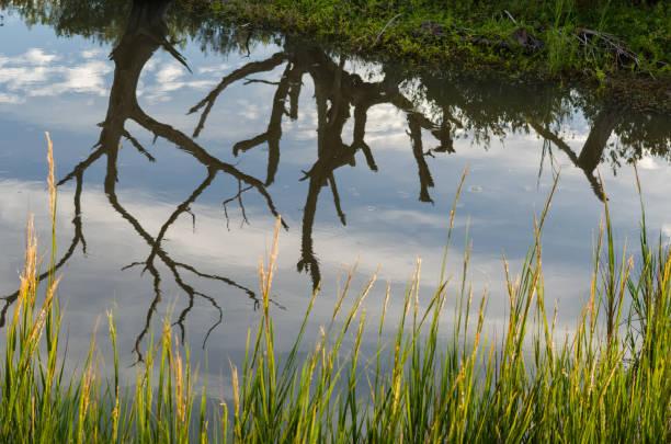 Marshlands Reflections stock photo