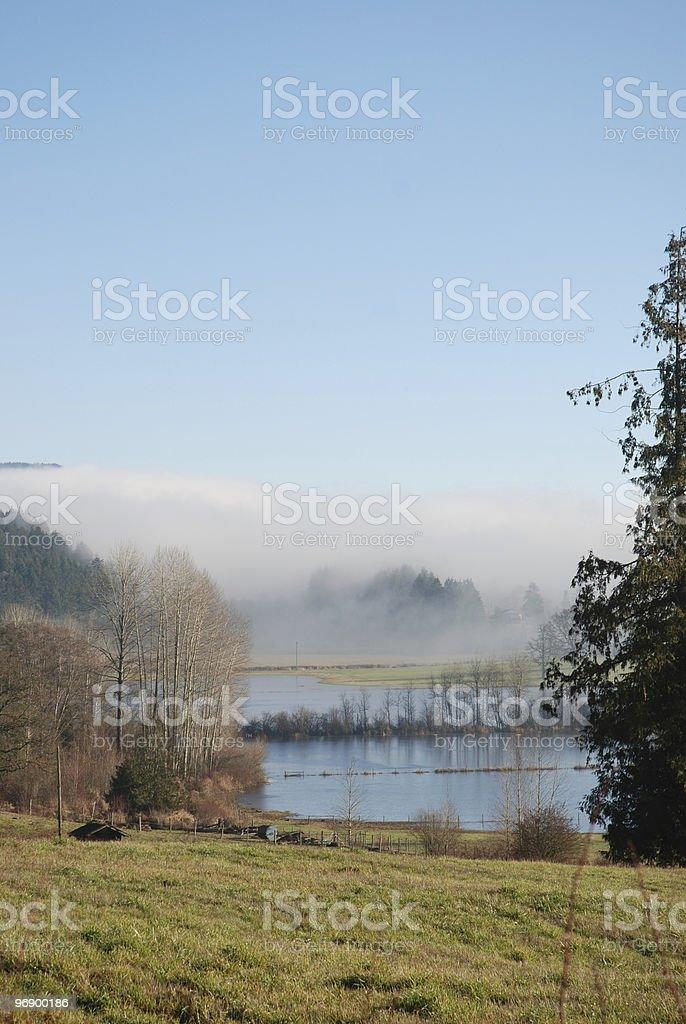 Marshy Field with Blue Sky royalty-free stock photo