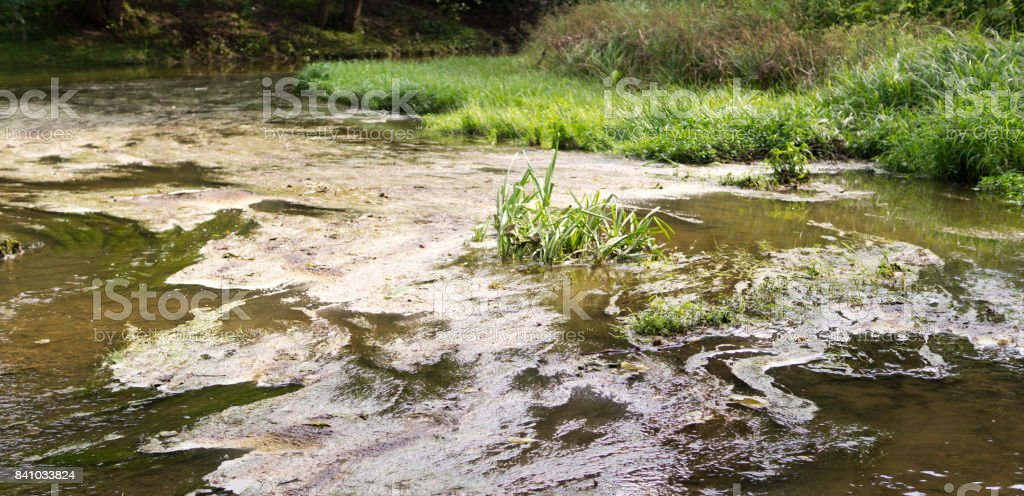 marshy forest river. nature, summer. stock photo