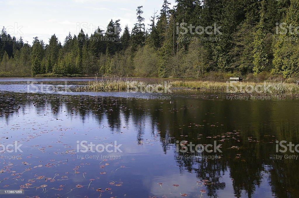 Marshy Lake royalty-free stock photo