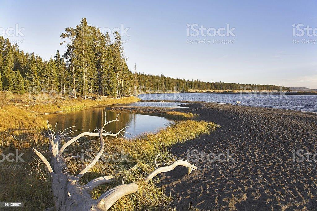 Marshy plain royalty-free stock photo