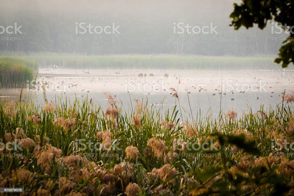 Marshy wetlands with many wild animals and birds. zbiór zdjęć royalty-free