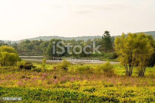 A Marshy Wilderness Covered in Wildflowers in the late summer season.