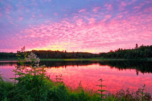marten river provincial park at sunset - provincial park stock photos and pictures