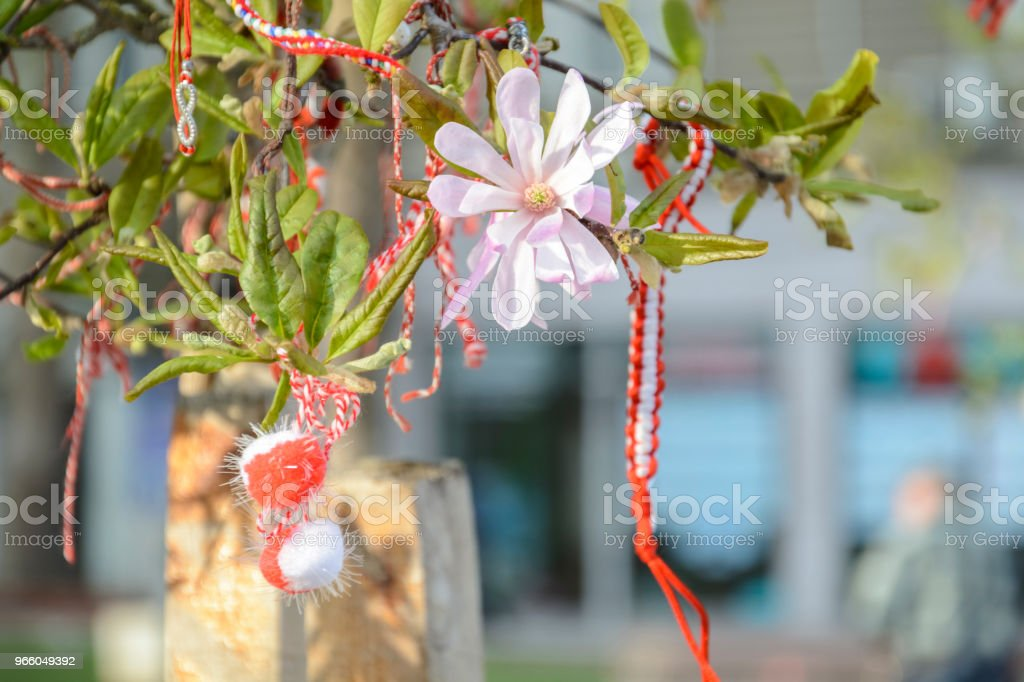 Martenitsa in a branch of Magnolia with flower. octopus martenitsa. - Royalty-free Backgrounds Stock Photo
