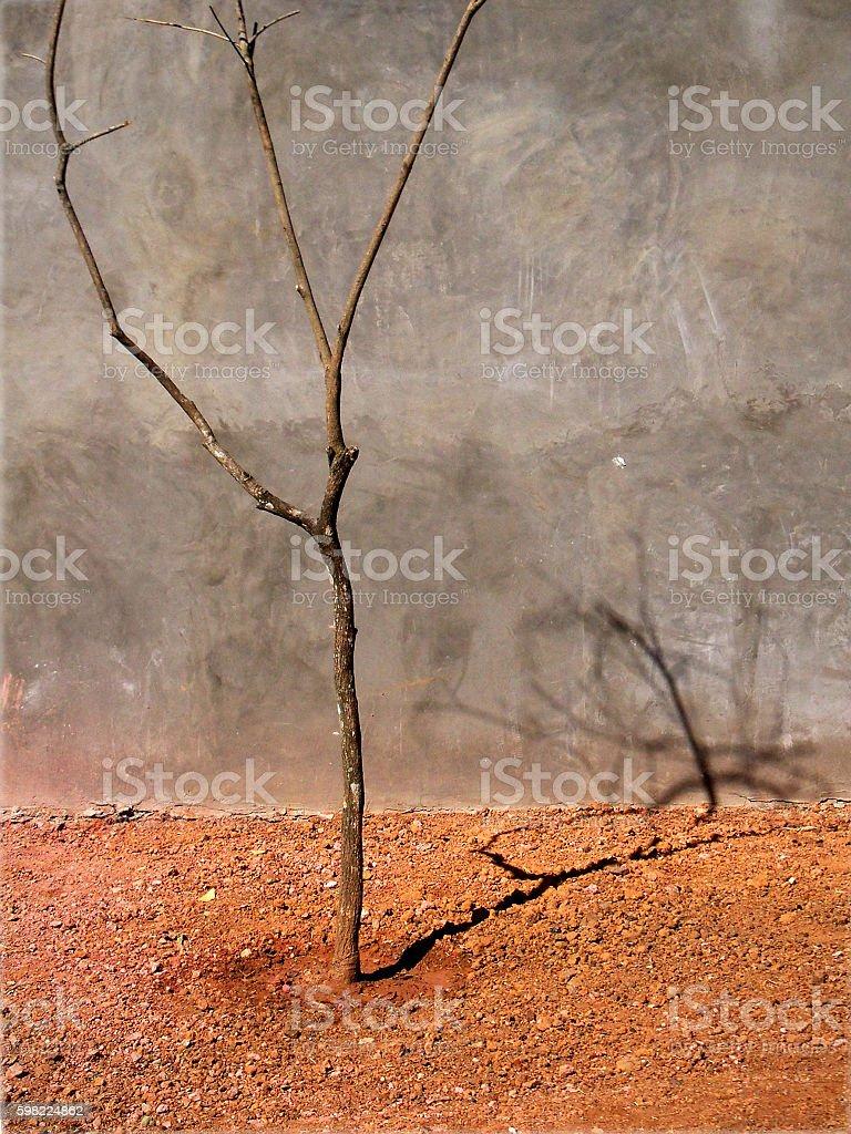 Martian garden. foto royalty-free