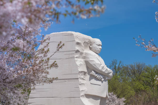 Martin Luther King Jr. Memorial in Washington, DC during the Cherry Blossom Festival Washington, DC/USA - April 13, 2015: Martin Luther King, Jr. Memorial by Chinese sculptor Lei Yixin on the National Mall in Washington, DC during the annual Cherry Blossom Festival. It is managed by the National Park Service. mlk stock pictures, royalty-free photos & images