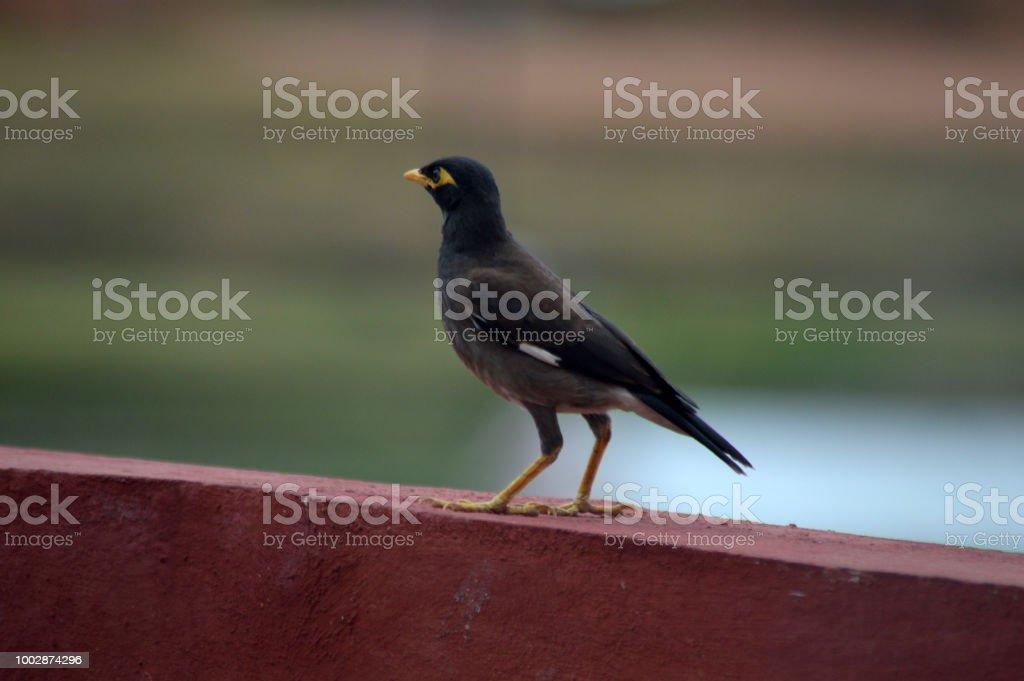 Martin triste sur le balcon d'une maison stock photo