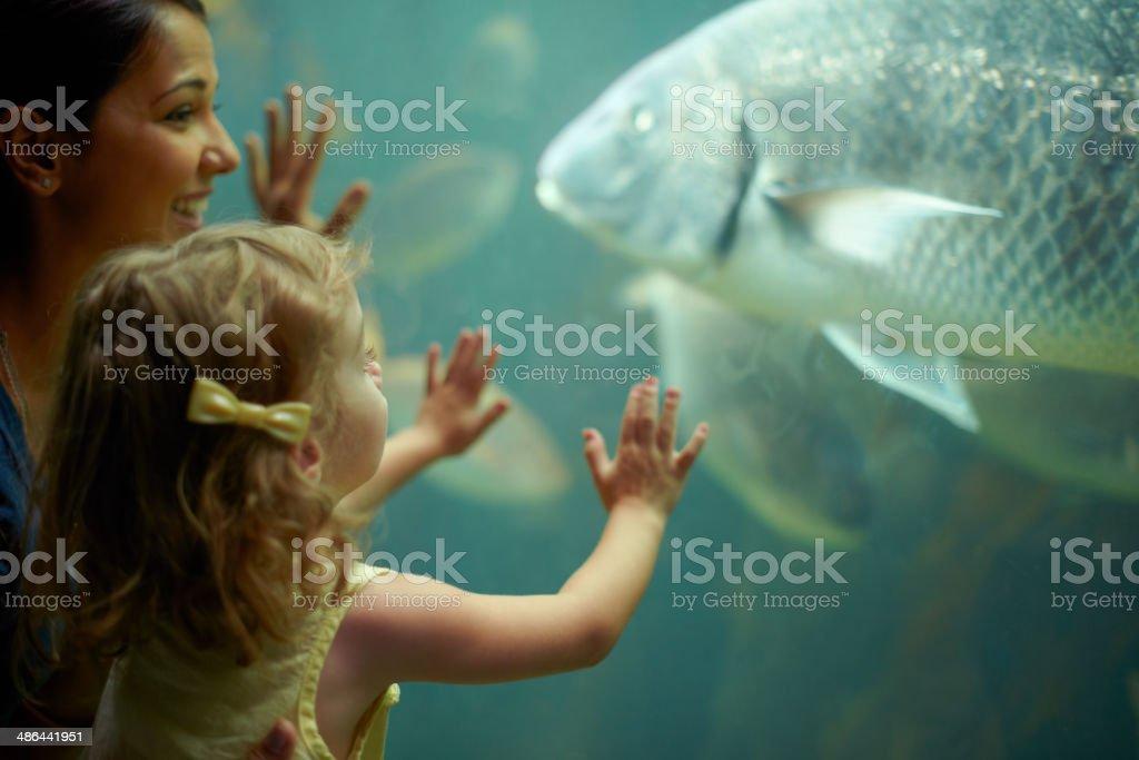 Marveling at the marine life stock photo