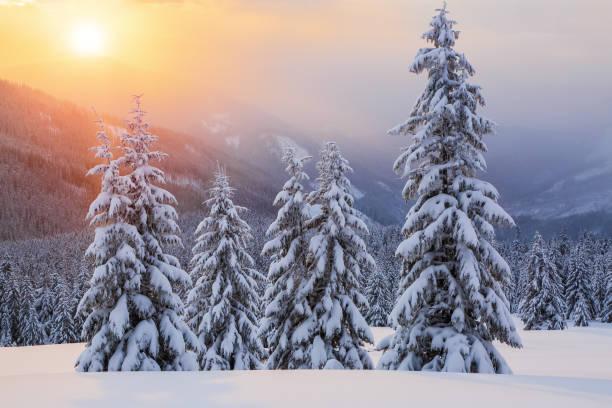 wunderbarer wintersonnenaufgang hoch in den bergen in wunderschönen wäldern. touristische landschaft. ort karpaten, ukraine, europa. - schneeflocke sonnenaufgang stock-fotos und bilder