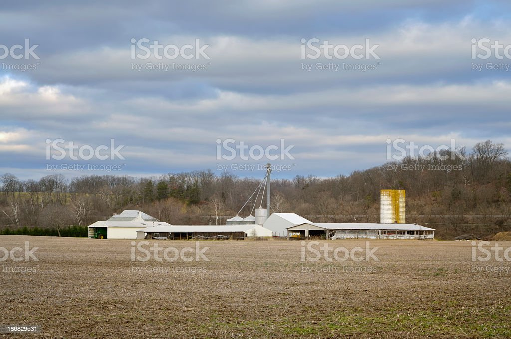 Maryland Cornfield In Winter stock photo