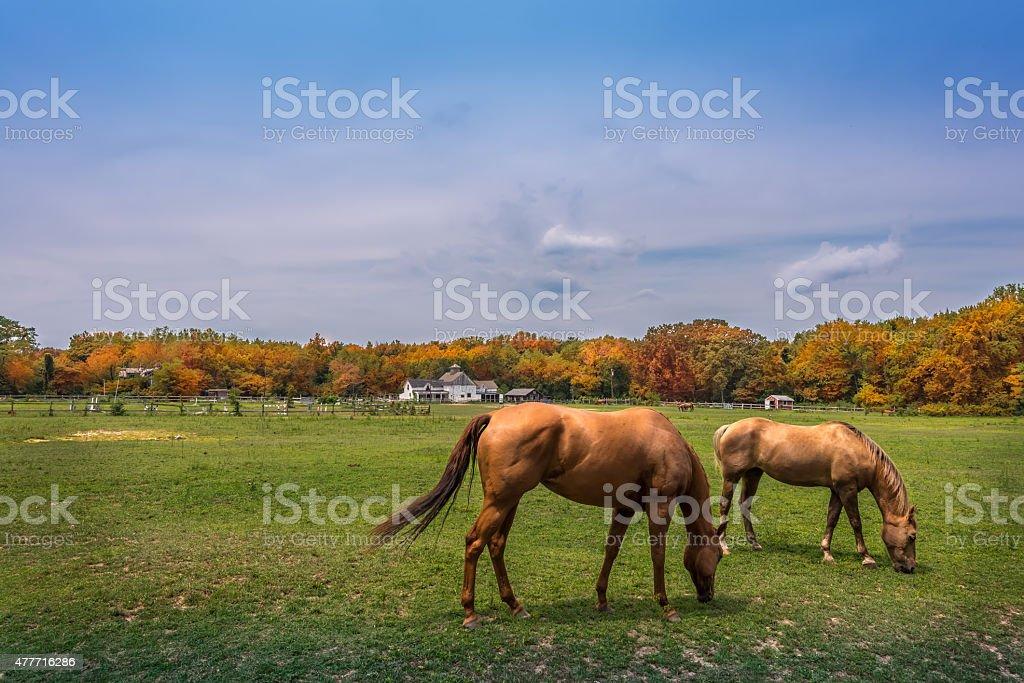 Maryland Pastures stock photo