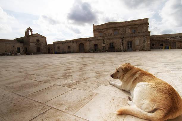 marzamemi, sizilien : hund mit leeren piazza - hundeplätze stock-fotos und bilder