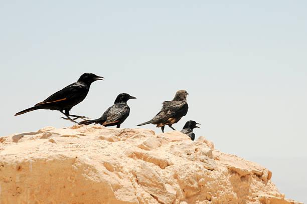 Festung Masada – Foto