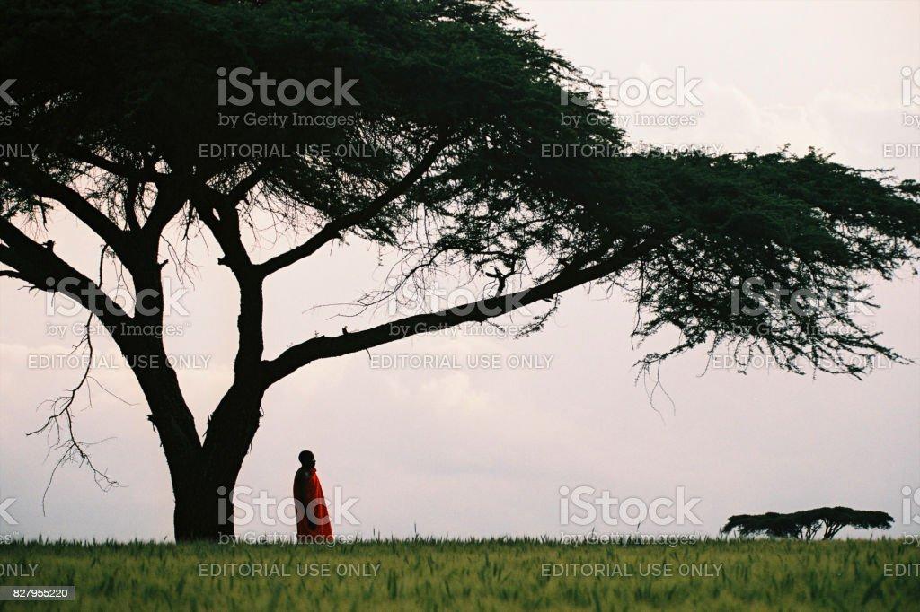 Masai man standing under acacia tree stock photo