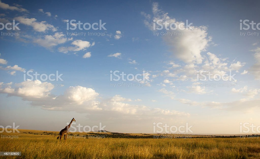 Masai Mara stock photo