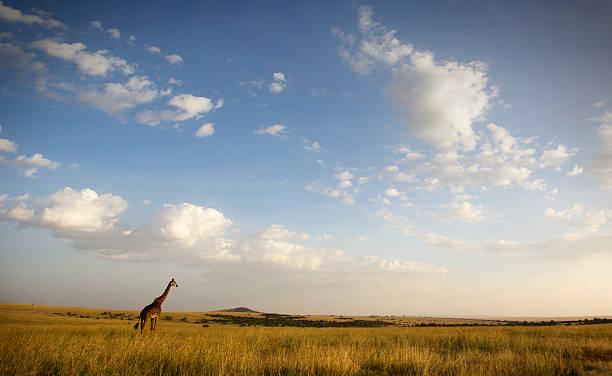 Masai Mara stock photo