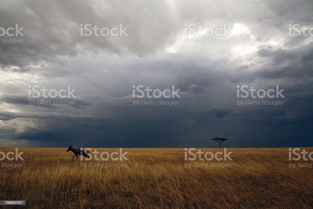 Masai Mara storm royalty-free stock photo